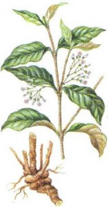 ibogaine category